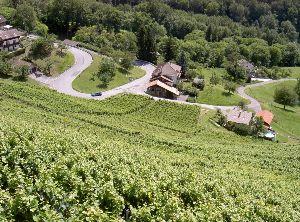 Weinberge östlich des Genfer Sees